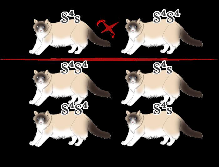 s4s x s4s4